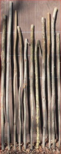 Staves Images On: Staves: 28th Cambridge Scouts